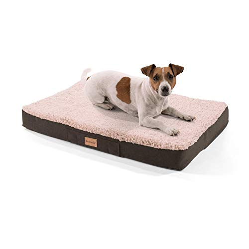 brunolie Balu Hundebett, waschbar, orthopädisch und Rutschfest, Hundekissen mit kuscheligem Plüsch, Größe S, Beige