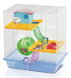 Hamsters 7