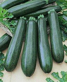 """Premier Seeds DirectCOU06 ZucchiniSamen """"F1 Spinnlose Schönheit"""" (Packung mit 12)"""