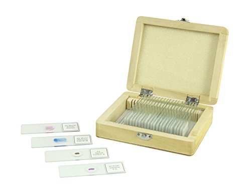 Celestron 25 Fertigpräparate für Mikroskopie  (25-er Pack)