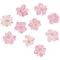 HEALLILY Flores secas Reales prensadas Adornos de Flores Naturales para DIY joyería Colgante teléfono Caja Tarjetas 20 Piezas