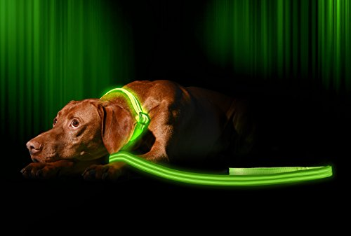 Illumiseen LED Dog Lead/Leash - USB Rechargeable - Available in 6 Colours & 2 Sizes - Makes Your Dog Visible, Safe & Seen 1