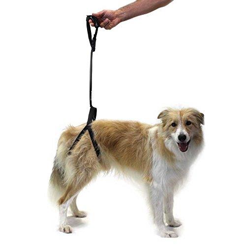 Ortocanis Arnés de Soporte para Perro