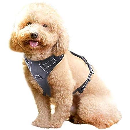 rabbitgoo Hundegeschirr Welpen Verstellbar Geschirr Hund Auto Dog Harness Brustgeschirr Ausbruchsicher Atmungsaktiv Hundegeschirr für Kleine Mittlegroße Große Hunde Schwarz Rosa Blau S M L XL