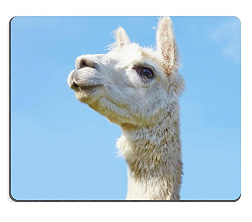 Luxlady Mousepads alpaca con Head Held High in the Sky Image 21168040Customized Art desktop laptop Gaming Mouse pad