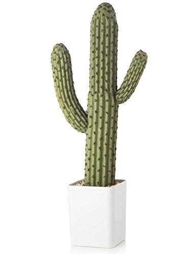 Grande en maceta de Cactus planta 14 X 12 X 58 cent?metros cubic