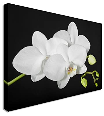 White Orchid on Black Floral Flower Canvas Wall Art Picture - Large 12x16 inches - low-cost UK canvas store.
