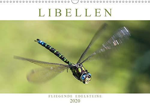 Libellen - Fliegende Edelsteine (Wandkalender 2020 DIN A3 quer)