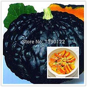 PlenTree 20 graines de Citrouille japã3 N, graines de Citrouille, graines de Fruits et légumes DIY plantiing decoraciã3 N jardãn Douce et Snacks délicieux