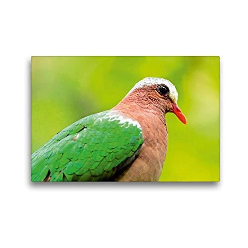 CALVENDO Lienzo de 45 cm x 30 cm Horizontal, Belleza exótica - Paloma Verde con Pico Rojo - Imagen sobre Bastidor. Estepani, Taiwán, Asia Animales, Animales