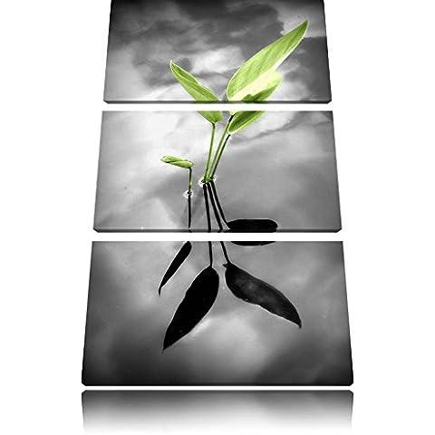 foglie verdi in acquain 3 pezzi immagine Foresta tela 120x80 su tela, Immagini XXL completamente incorniciato con grandi cornici di cuneo, stampe d'arte sulla foto parete con telaio, gänstiger come un quadro o un dipinto a olio, non un manifesto o cart