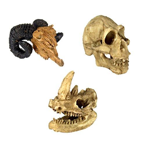 Sharplace 3pcs Tête Crâne Décor pour Reptile Terrarium Vivarium en Résine pour Jeu de Reptiles
