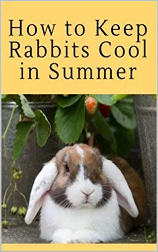 7 Things to Consider When Adopting a Rabbit (English Edition)