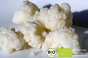 Bio Kefir/ Milchkefir Getränk mit aktiven Kefirknollen für zunächst 250ml Kefir-Getränk [ DIE KNOLLEN WACHSEN UND KÖNNEN IMMER WIEDER VERWENDET WERDEN)