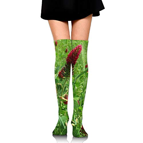 Sangeigt Kniestrümpfe, Red Clover In Bloom Cotton Compression Socks For Women. Graduated Stockings For Nurses, Maternity, Travel, Flight,Varicose Veins,Running & Fitness, Calf Support.