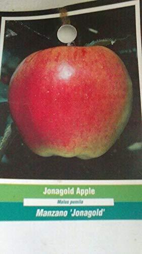 4'-5' leben Jona Fruit Live-s saftig frischen Heim by Farmerly -