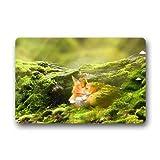 Dalliy s¨¹? fox tier Fu?matten Doormat Outdoor Indoor 23.6