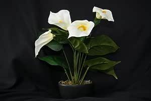 Calla Blüht Nicht : k nstliche blumen wei e calla lilie k nstliche pflanze in einem modernen schwarzen topf 36cm ~ Watch28wear.com Haus und Dekorationen