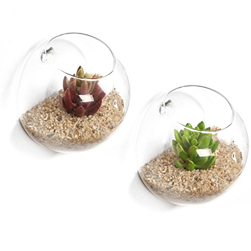 Lot de 2 terrariums en verre transparent à fixation murale MyGift, bocal de présentation à suspendre pour bromélia, bougie