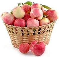 Fash Lady 1: Zwerg Bonsai-Baum 50 Samen Pick Köstliche Früchte In Ihrem Garten Einfach-wachsen Bonsai FruitFree Versand 1