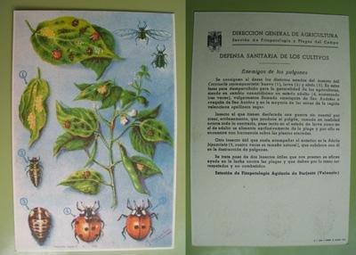 postal-publicidad-advertising-postcard-enemigos-de-los-pulgones-dibujo-de-mgonzalez-tolsa