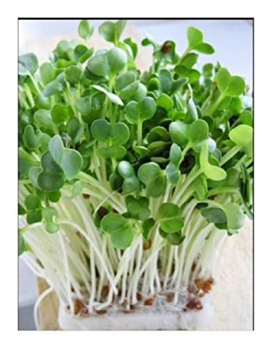 """Semi Premier diretto ORG131B 200g ravanelli """"daikon"""" semi germinazione organici"""