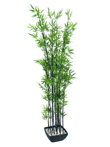 Ornamentali di bambù in guscio decorativo, 180cm