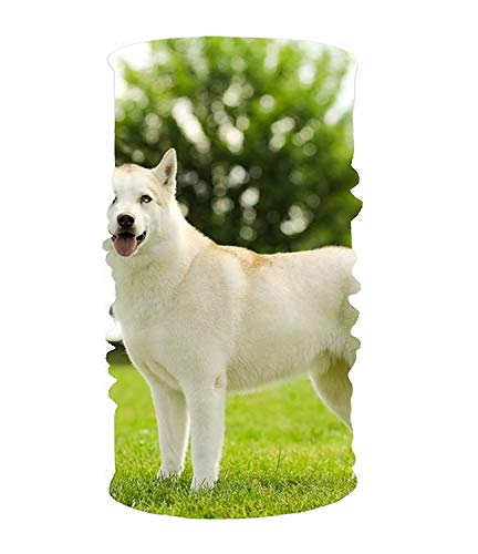 Bikofhd White Dog 16-in-1 Magic Scarf