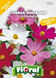 Sementi da fiore di qualità in bustina per uso amatoriale (COSMEA SENSATION IN MISCUGLIO)