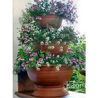 Blumensäule Blumenampel Blumentreppe Blumenständer (B005GKGFLM) | Amazon price tracker / tracking, Amazon price history charts, Amazon price watches, Amazon price drop alerts