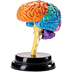 Cerebro estructural Modelo zerlegtes
