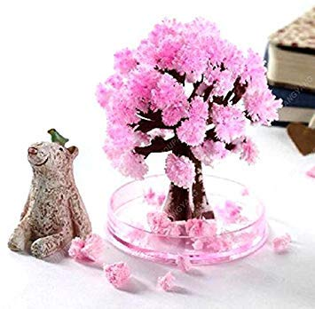 20 semillas / paquete de semillas de cerezo japonés ornamentales semillas de árboles de cerezo flor bonsai flores de cerezo para el hogar y jardín púrpura