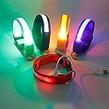 Wandrola LED-Hundehalsband, wiederaufladbar, leuchtet Sicherheits-Martingale-Training, erhältlich in 5 Farben und 3 Größen, damit Ihre Hunde sichtbar, sicher und gesehen Werden