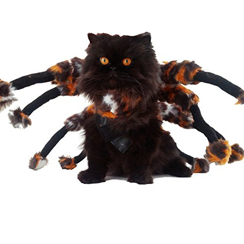 (Super süße Hunde Kleid bis Halloween Funny Kostüm Furry Spider)