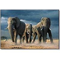 African-Elephants Steve Bloom-Poster 61 x 91,5 Cm/Poster ""