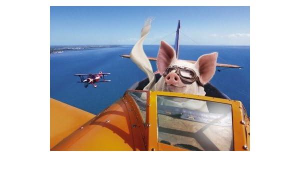 Pig Flying Plane Birthday Card: Amazon co uk: Kitchen & Home