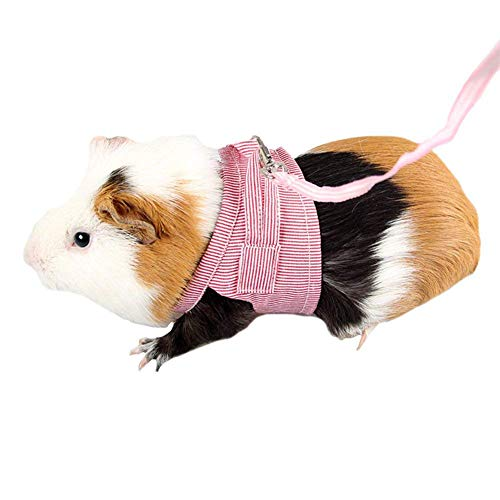 Qiyun Kleid mit Leine aus Weicher Baumwolle für Hamster, Eichhörnchen, Haustiere, S/L Rosso S (Haushaltswaren)