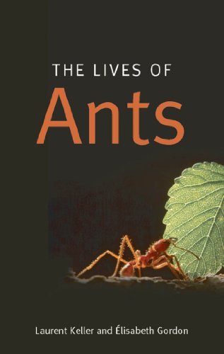 the-lives-of-ants