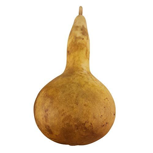 1 Kalebasse dick (20-25 cm): Zierkürbis | Dekoration | Trinkgefäß | Kürbisrassel | getrockneter Flaschenkürbis (Lagenaria siceraria)| lange haltbar