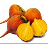Las algas importación de semillas Cabeza raíz de remolacha en las semillas de remolacha de la herencia vegetal Fácil Crecer En bonsai Planta de tiesto bueno para cocinar 200 PC 5