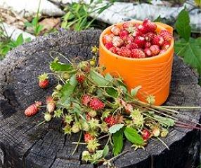 Bobby-Seeds Obstsamen Erdbeere Alexandria Walderdbeere Portion