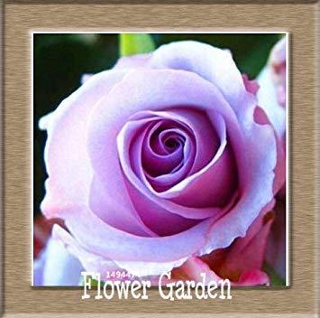 VISTARIC 4: pots de fleurs Big jardinières, 20 types, 50 PCS/Lot, Rainbow Rose graines belle rose graines bonsaïs graines, 4 B4LT8H