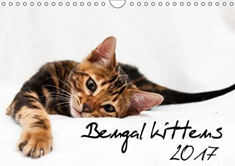 Bengal Kittens 2017 2017: Wonderful Moments with Bengal Kittens