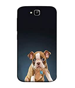 FUSON Designer Back Case Cover for Huawei Honor Holly 2 Plus :: Huawei Honor 2 Plus (Animal Cat Cute Domestic Preety)