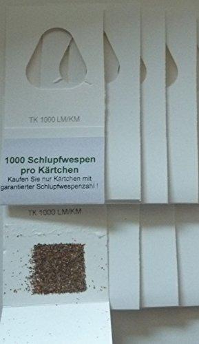 schlupfwespen-gegen-kleidermotten-4-stuck-1000-er-kartchen-x-5-lieferungen