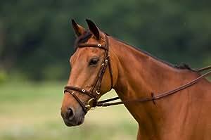 "Bridon NORTON nubuck ""Coeur"" - havane, mains caoutchouc brun - cheval"