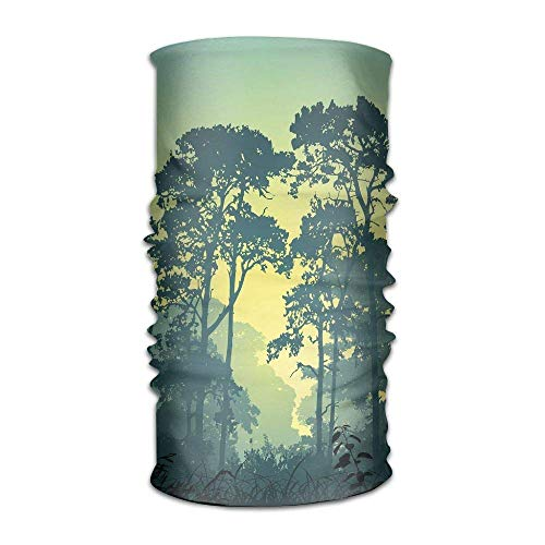 ist Forest Scenery with Tree Tops at Sunset Hazy Woodland Rural Landscape Show Headpiece ()