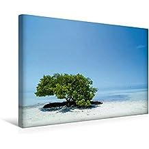 Premium Textil-Leinwand 45 cm x 30 cm quer, FLORIDA KEYS Einsamer Baum   Wandbild, Bild auf Keilrahmen, Fertigbild auf echter Leinwand, Leinwanddruck: Idyllischer Meeresblick (CALVENDO Orte)