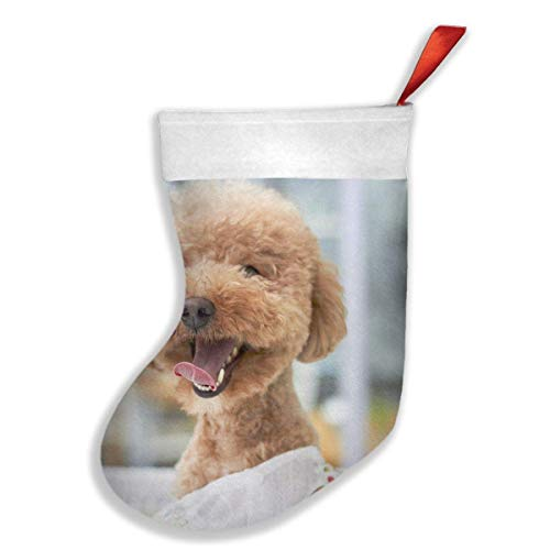 Voxpkrs Cute Christmas Dog Long-Coated Brown Dog Wearing White Dress 20 18 Inch Weihnachtsstrumpfs Xmas Socks Ornament Themed Luxury Glam Trendy Creative Matching Fireplace - White Christmas Themed Kostüm
