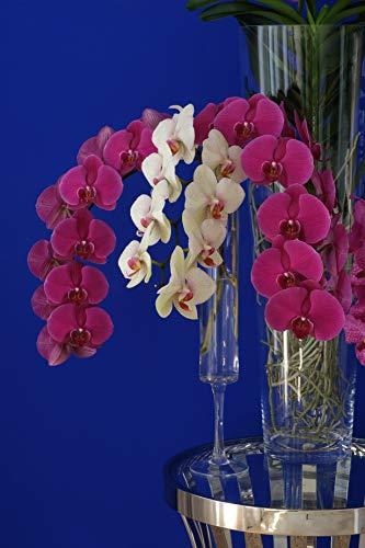 Gelukkig Bloemen Elegante Glasvase auf hohem Fuß Orchideenvase H 49 cm Ø 9.5 cm